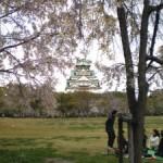 大阪城・西の丸庭園で花見!